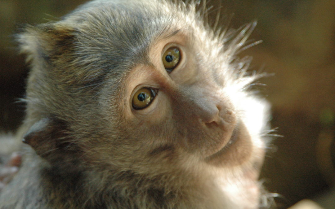 Stem Cells heal five damaged monkey hearts