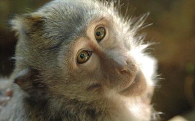 Stem Cells heal five damaged monkey hearts
