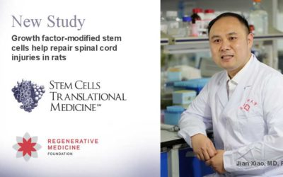 Growth factor-modified stem cells help repair spinal cord injuries in rats