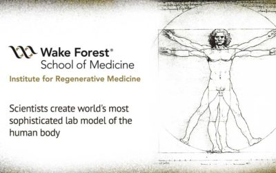 Wake Forest scientists create world's most sophisticated lab model of the human body