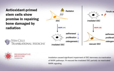 Antioxidant-primed stem cells show promise in repairing bone damaged by radiation